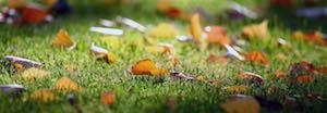 pelouse d'automne
