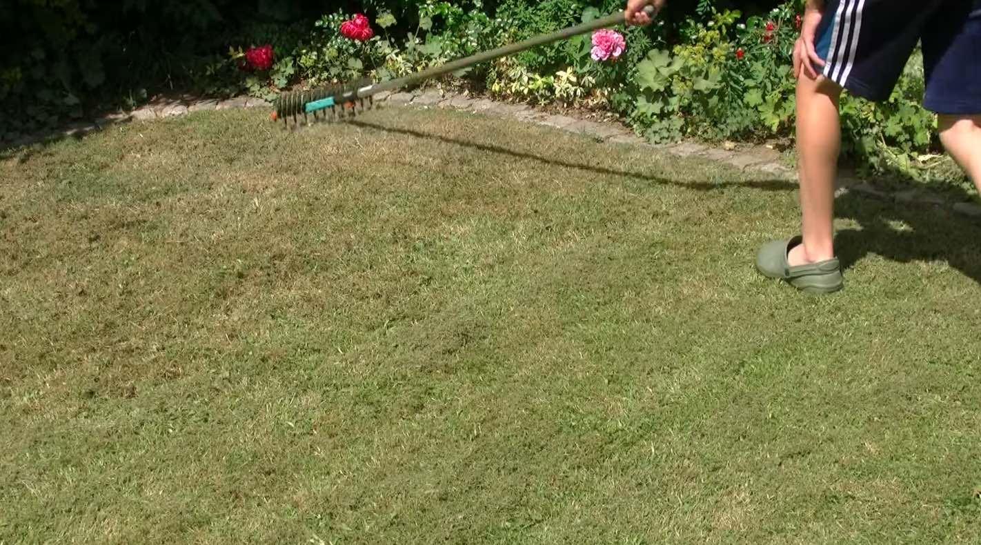 Comment faire pousser un beau gazon tche jaune sur le for Tarif pour tondre une pelouse