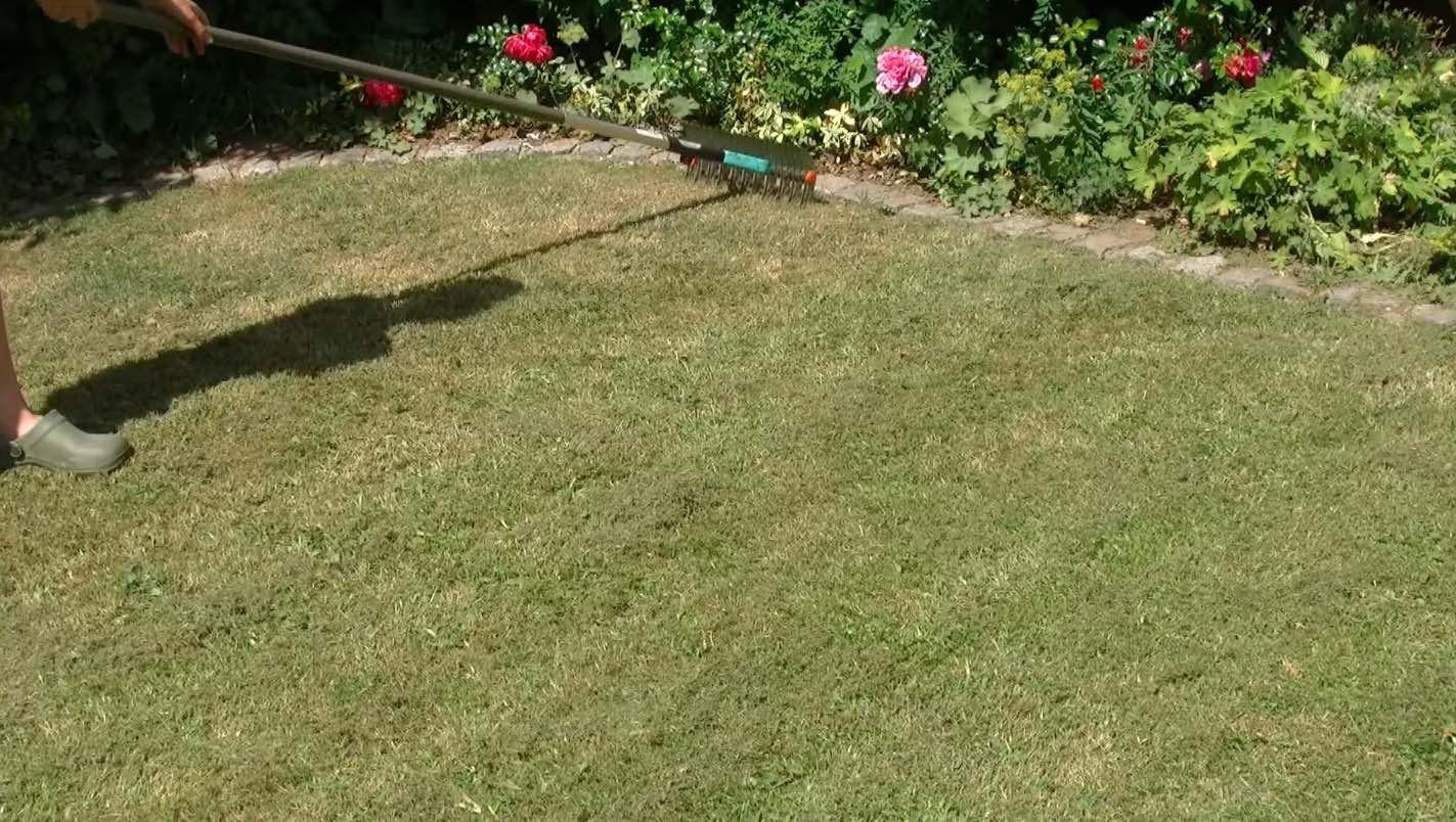 scarifier la pelouse en croisé