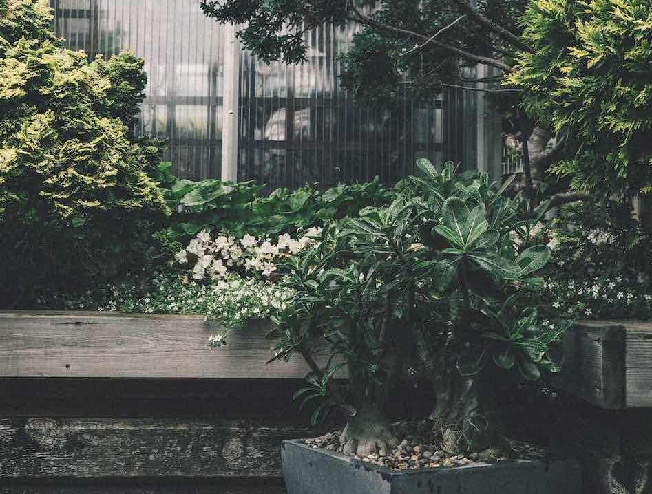 jardin vert